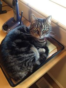 Inbox kitty
